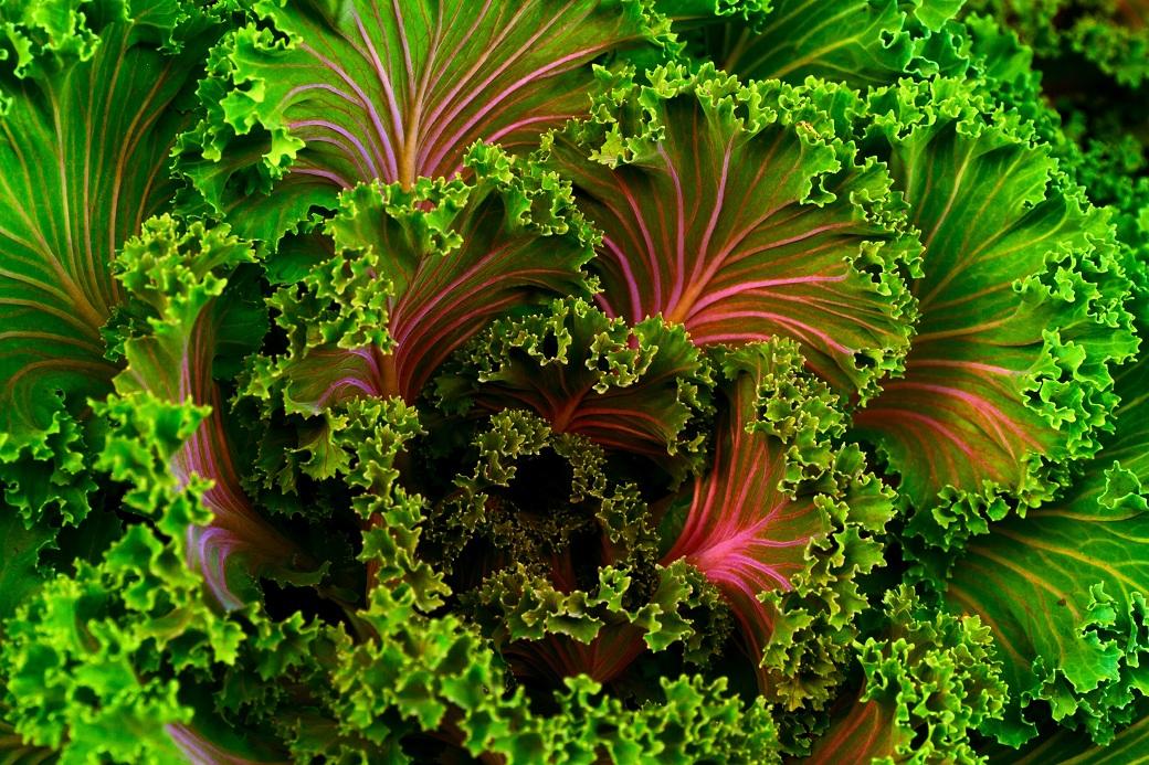 czy warto jeść zielone warzywa