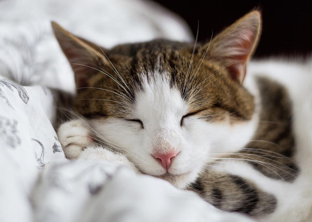 dlaczego spanie jest ważne