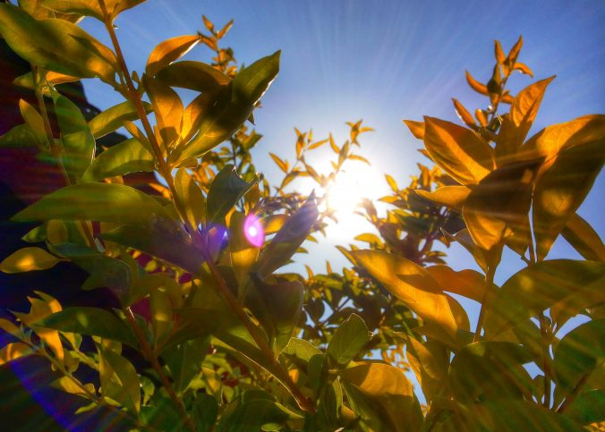 pozytywny wpływ roślin na życie człowieka