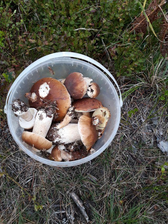 grzyby w wiaderku